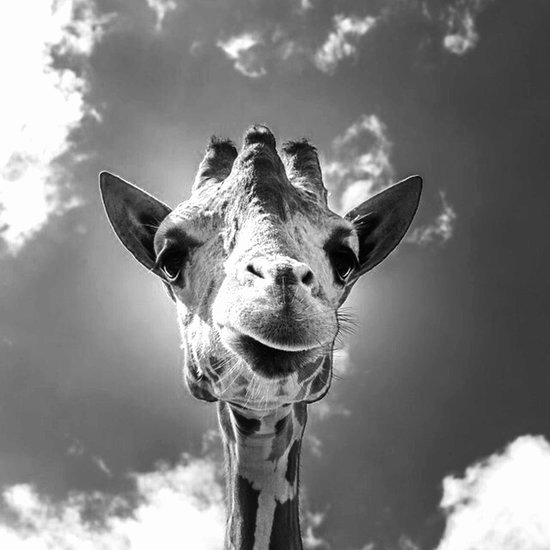 Cool Black and White Paintings Best Of Cool Giraffe Black and White Art Print by Mehrfarbeimleben