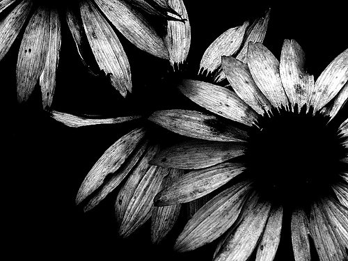 Cool Black and White Paintings New Black and White Art Graphy 2 Widescreen Wallpaper