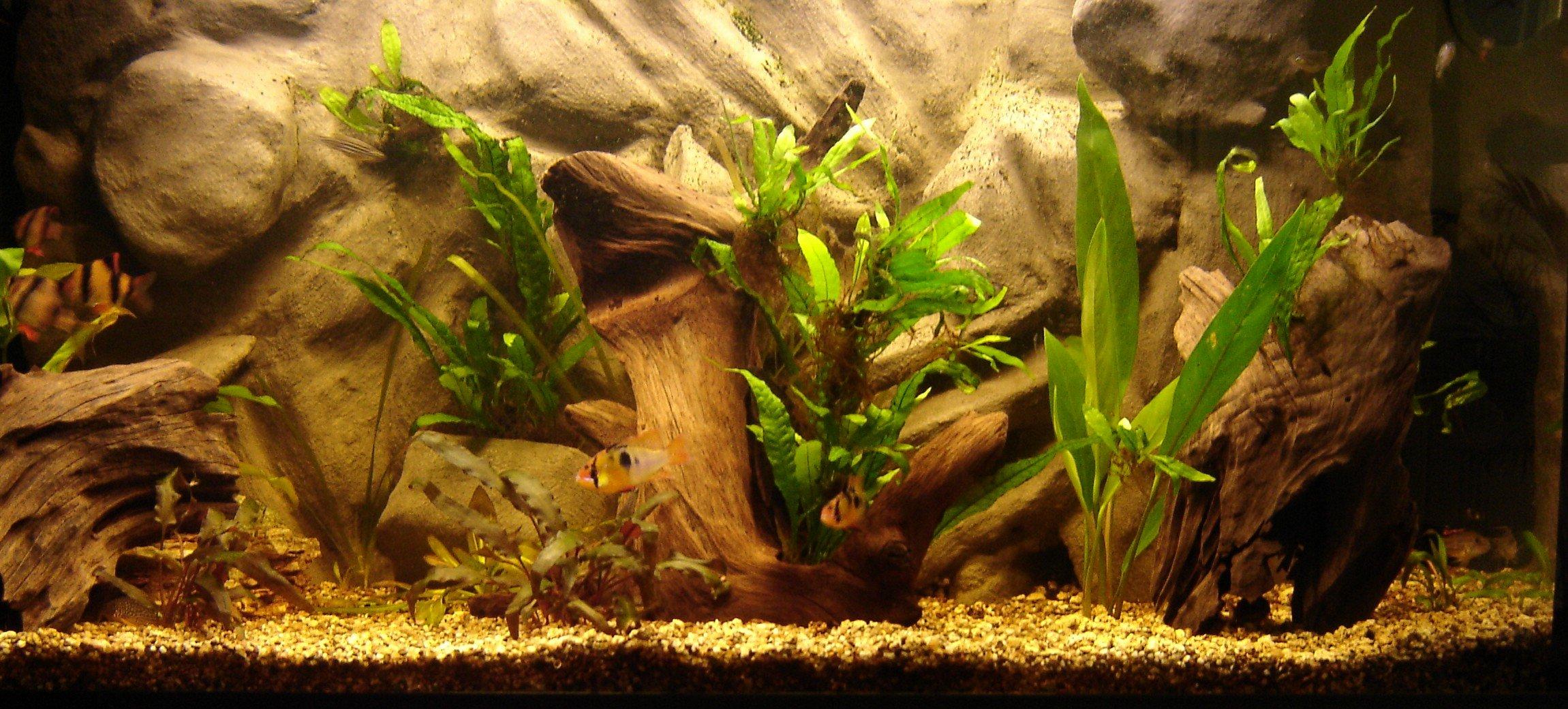 Cool Fish Tank Backgrounds Beautiful Cool Fish Backgrounds Wallpapersafari