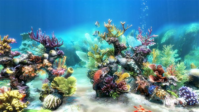 cool fish tank backgrounds 2