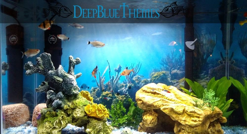 Cool Fish Tank Backgrounds Best Of Aquarium Image Gallery Deepbluethemes