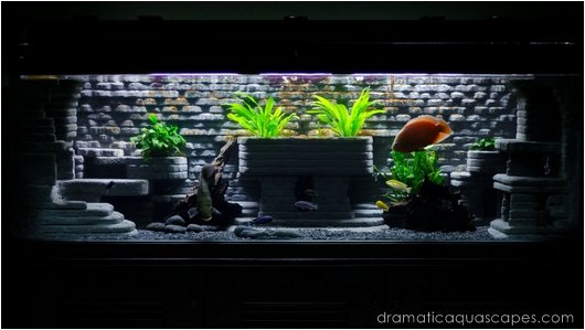 Cool Fish Tank Backgrounds Best Of Get Inspired with these 9 Diy Aquarium Backgrounds Tfcg