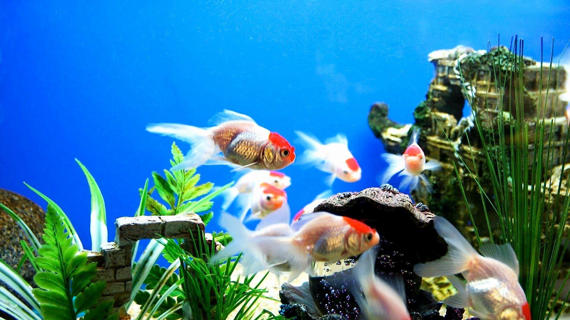 Cool Fish Tank Backgrounds Elegant Fish Tank Wallpapers Wallpaper Cave