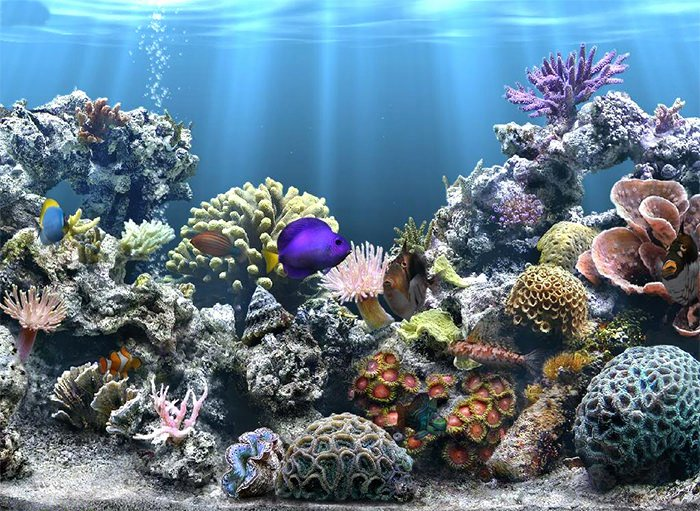 Cool Fish Tank Backgrounds Fresh 50 Best Aquarium Backgrounds