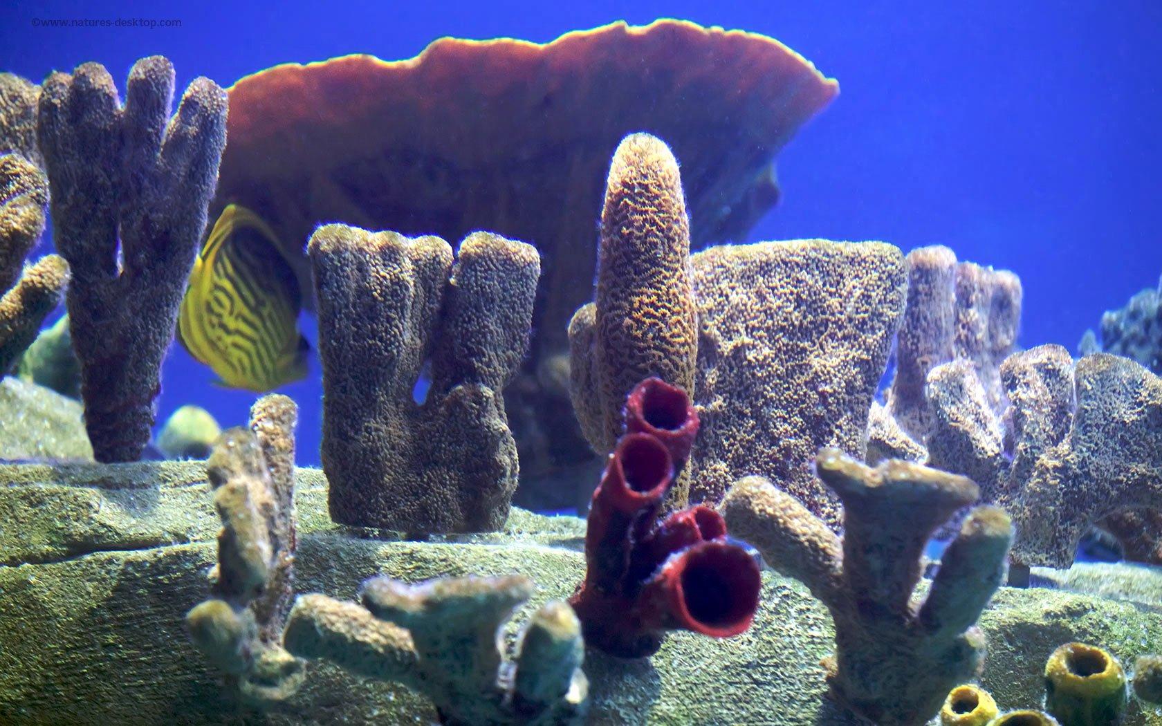 Cool Fish Tank Backgrounds Fresh [50 ] Free Wallpaper Fish Aquarium On Wallpapersafari