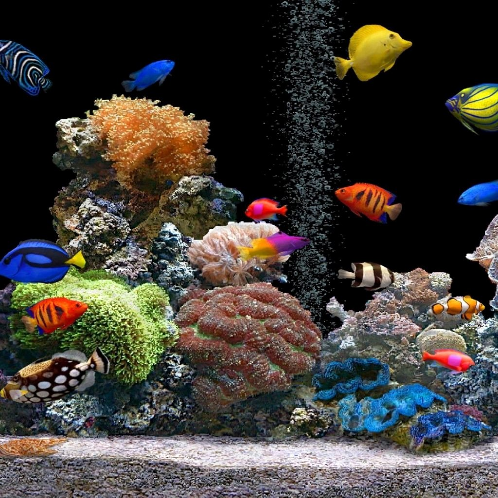 Cool Fish Tank Backgrounds Inspirational Fish Tank Moving Desktop Backgrounds