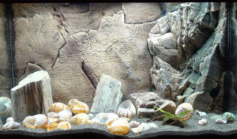 Cool Fish Tank Backgrounds Inspirational Shell Dweller Tank Aquariums