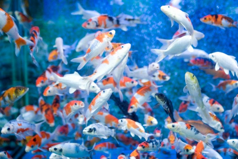 Cool Fish Tank Backgrounds Lovely Cool Fish Backgrounds ·① Wallpapertag