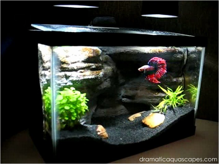 Cool Fish Tank Backgrounds Lovely Dramatic Aquascapes Diy Aquarium Background Betta Paradise