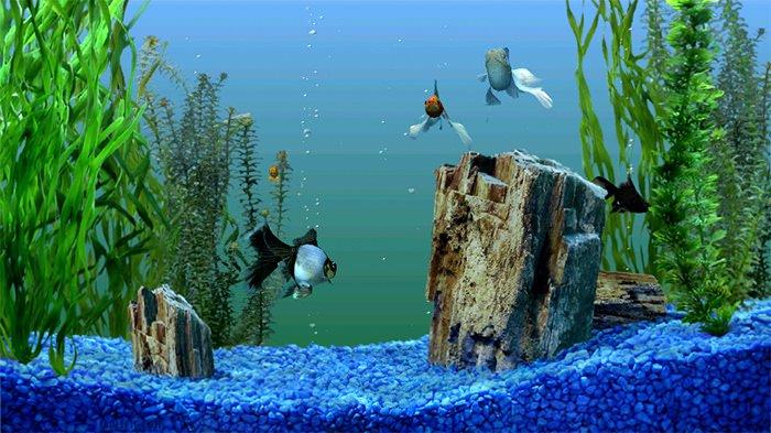 Cool Fish Tank Backgrounds New 50 Best Aquarium Backgrounds