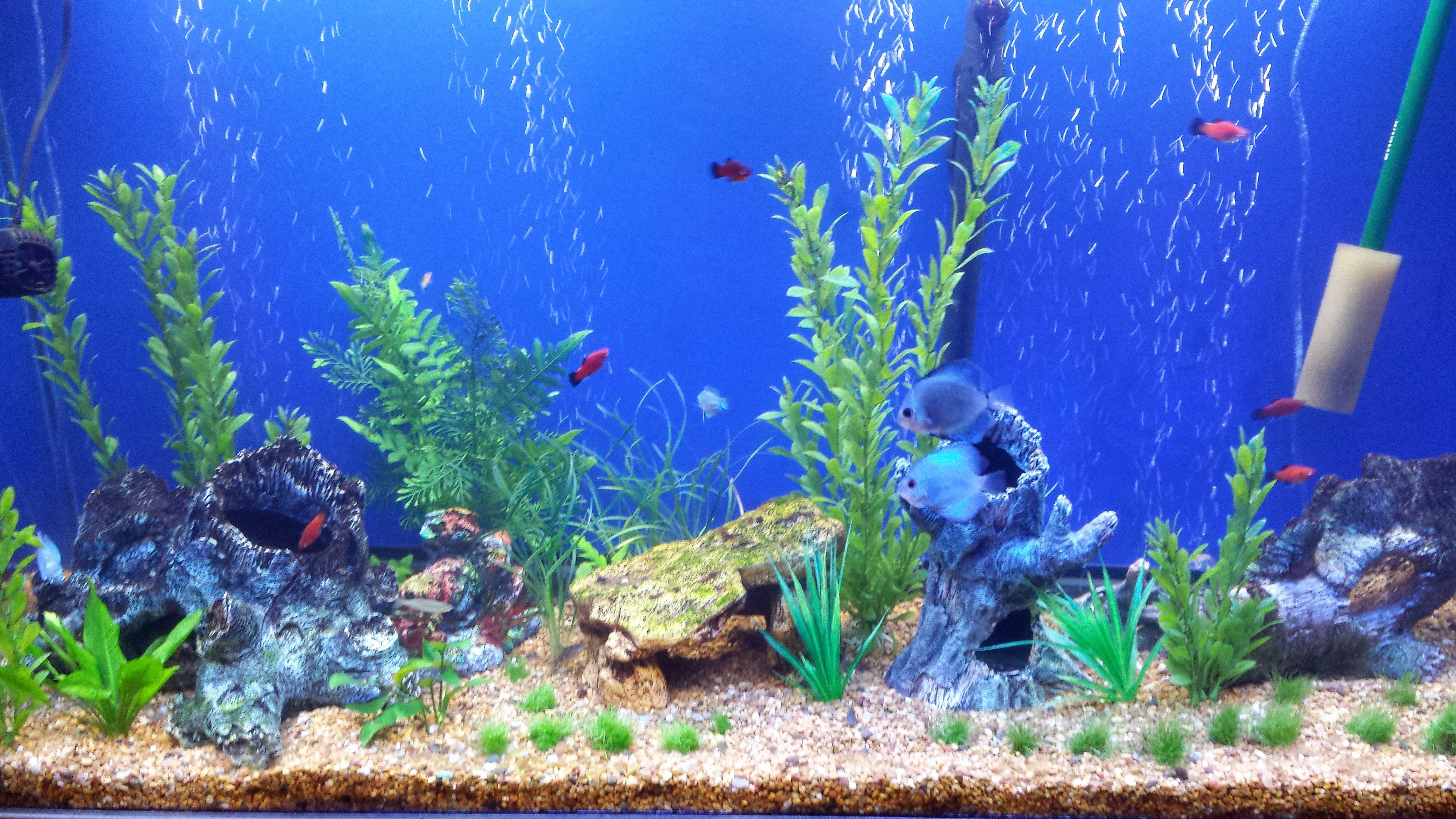 Cool Fish Tank Backgrounds Unique Fish Tank Wallpaper Wallpapersafari