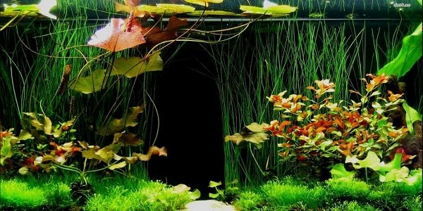 Diy Aquarium Background Paper Awesome why You Should Use A Fish Tank Background