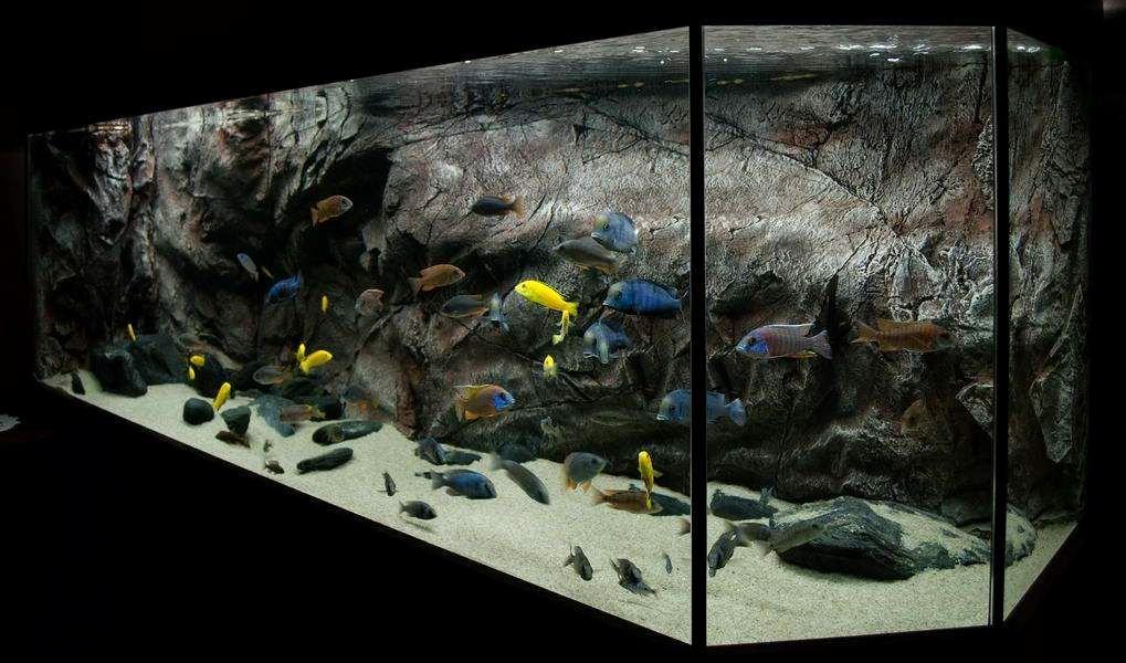 Diy Aquarium Background Paper Beautiful Diy Planted Aquarium Background Google Search