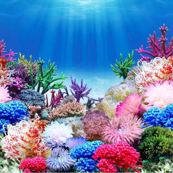 Diy Fish Tank Background Paper Awesome Aquarium Poster Background 1000 Aquarium Ideas