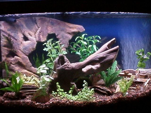 Diy Fish Tank Background Paper Awesome Diy Fake Rock Aquarium Background