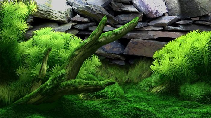 Diy Fish Tank Background Paper Elegant 50 Best Aquarium Backgrounds