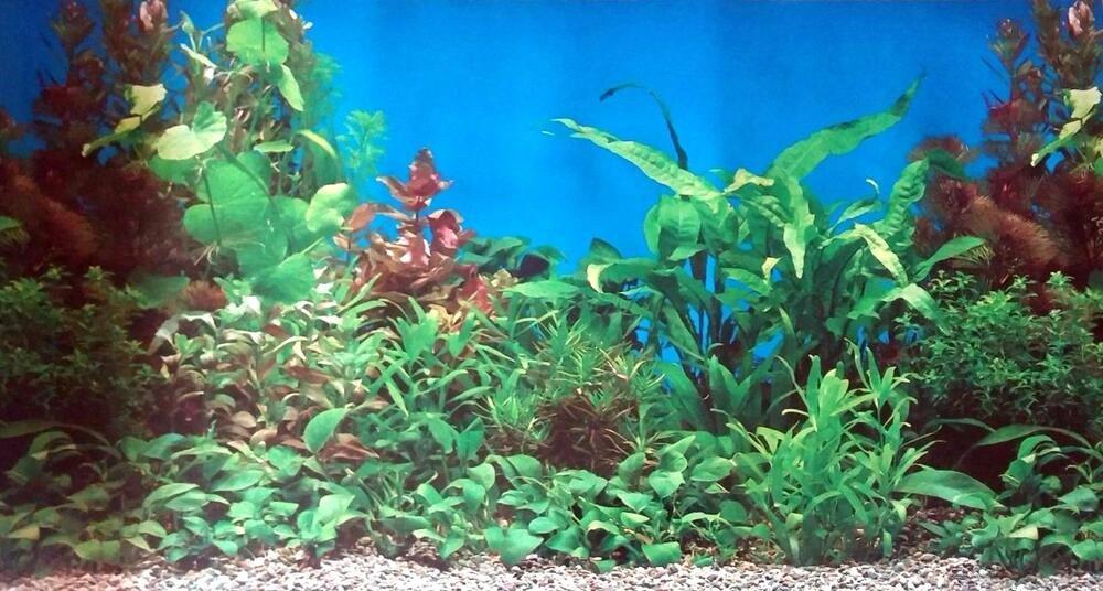 Diy Fish Tank Background Paper Elegant Underwater Plants Rocks Fish Tank Aquarium Background 19