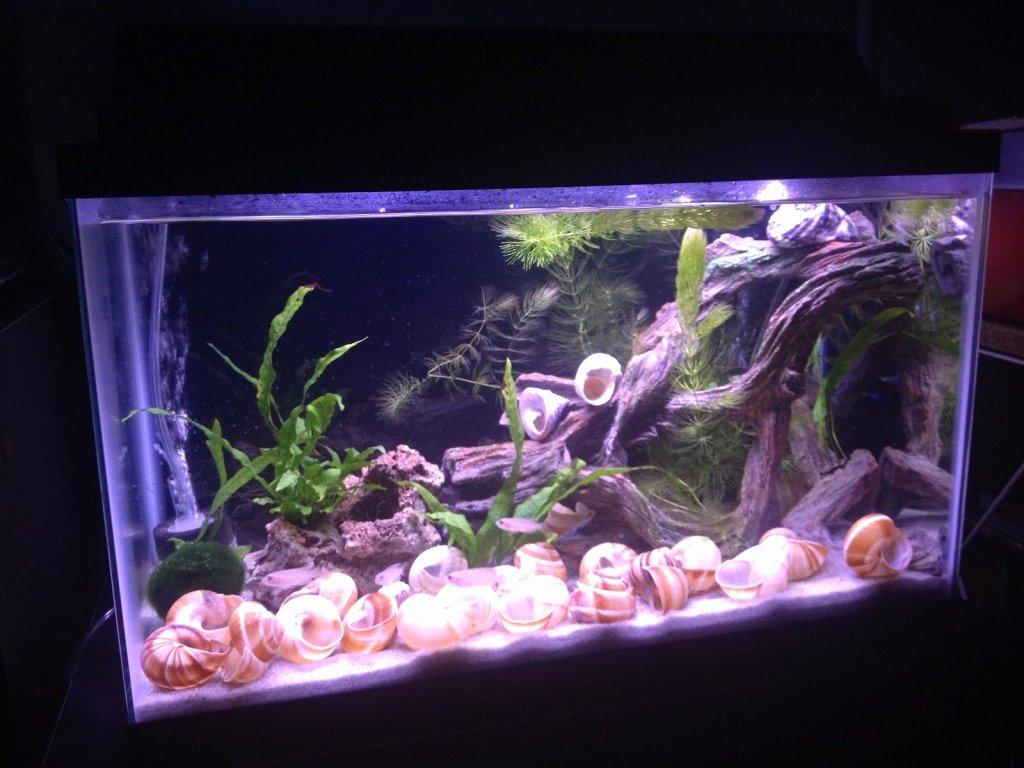 Diy Fish Tank Background Paper Luxury Diy Fabric Aquarium Background Petdiys