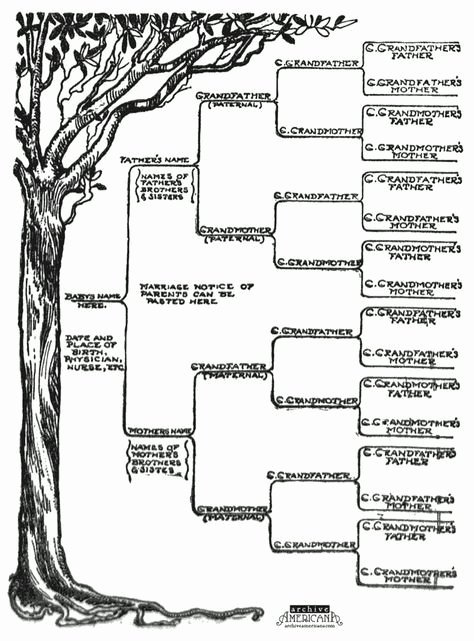 Family Tree Designs Templates Lovely 25 Best Ideas About Family Tree Templates On Pinterest