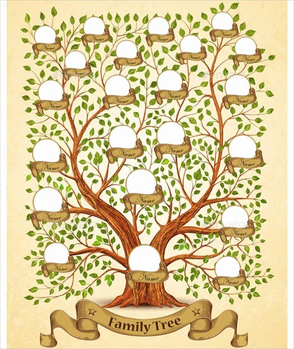 Family Tree Designs Templates New Best 25 Family Tree Templates Ideas On Pinterest