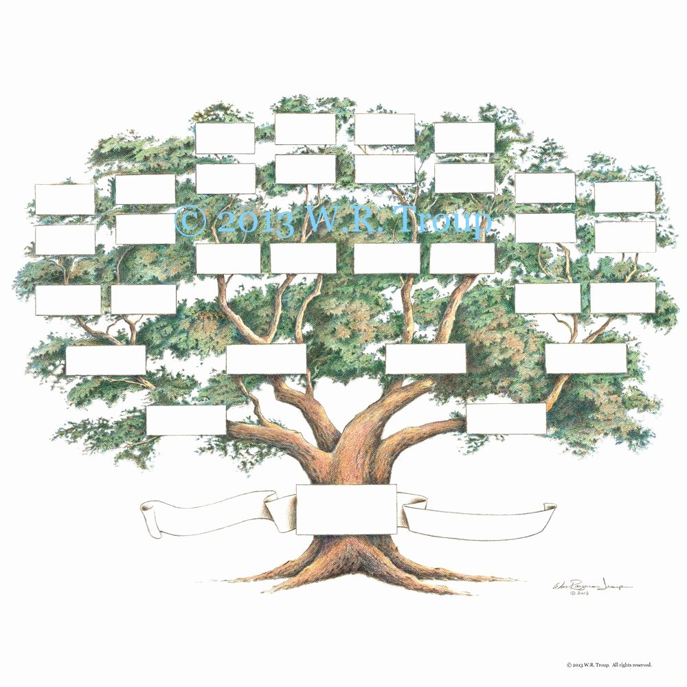 Family Tree Images to Print Fresh Family Tree Scrapbook Chart 12x12 Inch 5 6 Generations