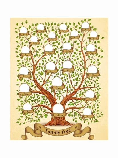 Family Tree Poster Template Elegant Family Tree Template Vintage Vector Illustration Posters