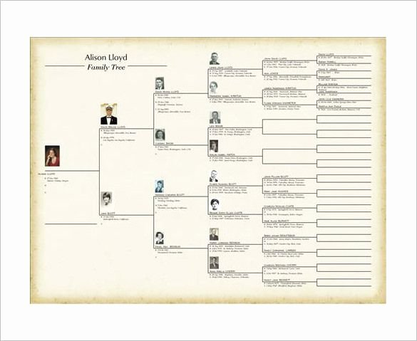 Family Tree Template Microsoft Office Inspirational Family Tree Book Template – 9 Free Word Excel Pdf