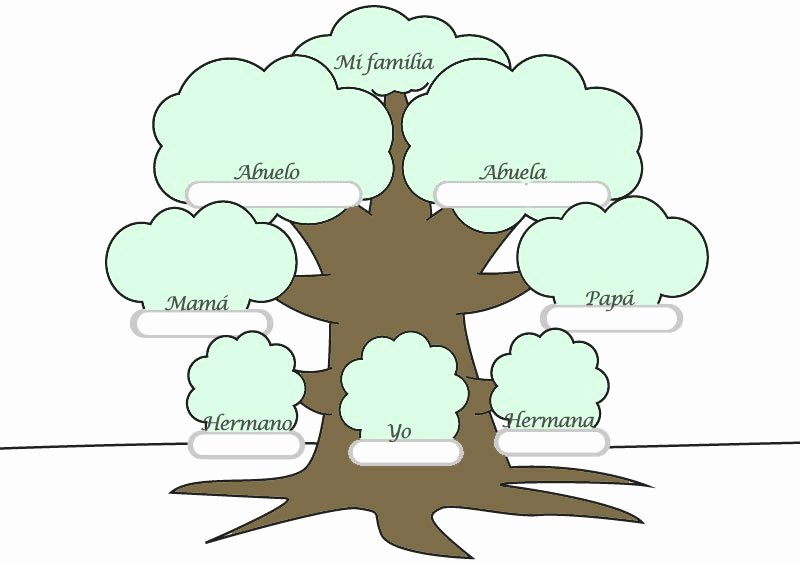 Family Tree Templates In Spanish Beautiful Seneca School Year 1 Science English English