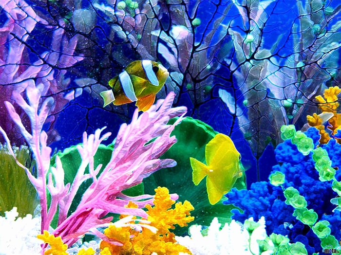 Fish Pictures to Print Awesome 50 Best Aquarium Backgrounds