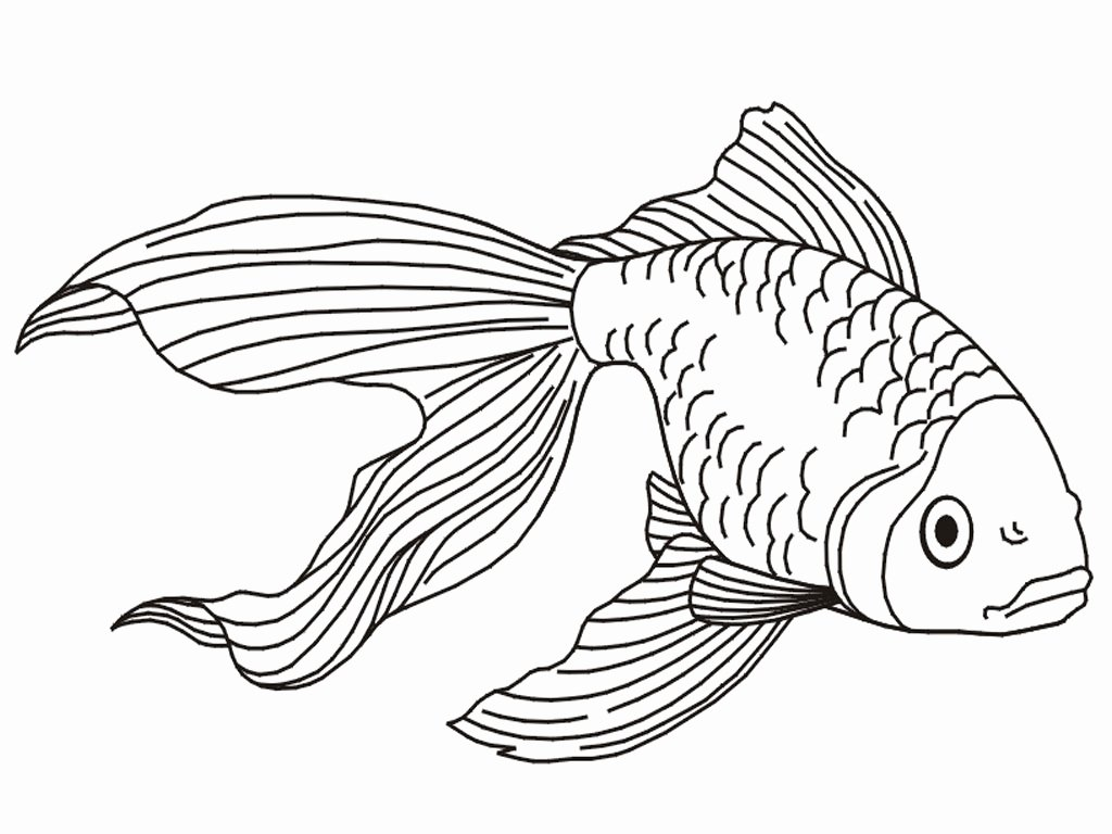 Fish Pictures to Print Awesome Free Printable Goldfish Coloring Pages for Kids