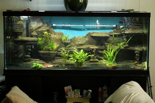 Fish Tank Background Ideas Awesome 25 Best Ideas About Aquarium Backgrounds On Pinterest