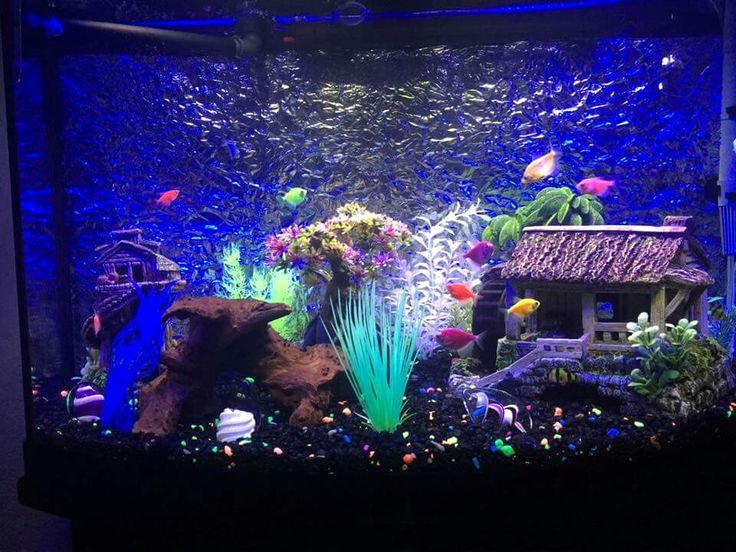Fish Tank Background Ideas Awesome A Group Members Beautiful Glofish Tank Group Members