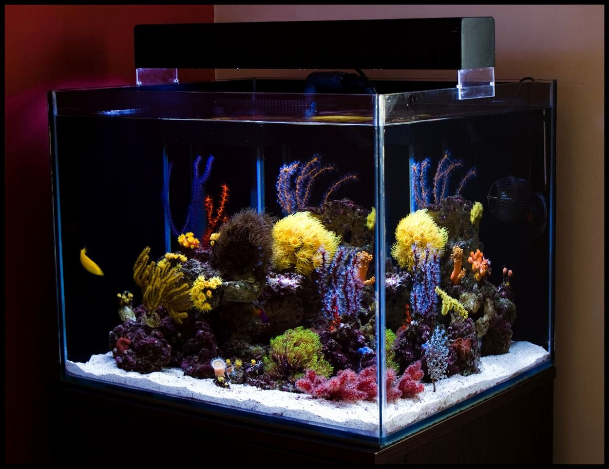 Fish Tank Background Ideas Beautiful Saltwater Aquarium Plans