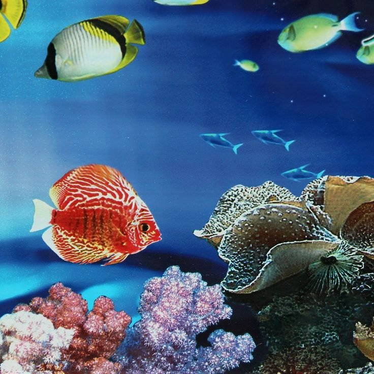 Fish Tank Background Ideas Best Of 17 Best Ideas About Aquarium Backgrounds On Pinterest