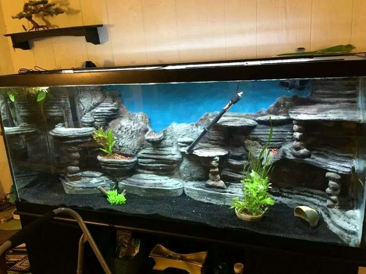 Fish Tank Background Ideas Best Of 25 Best Ideas About Aquarium Backgrounds On Pinterest