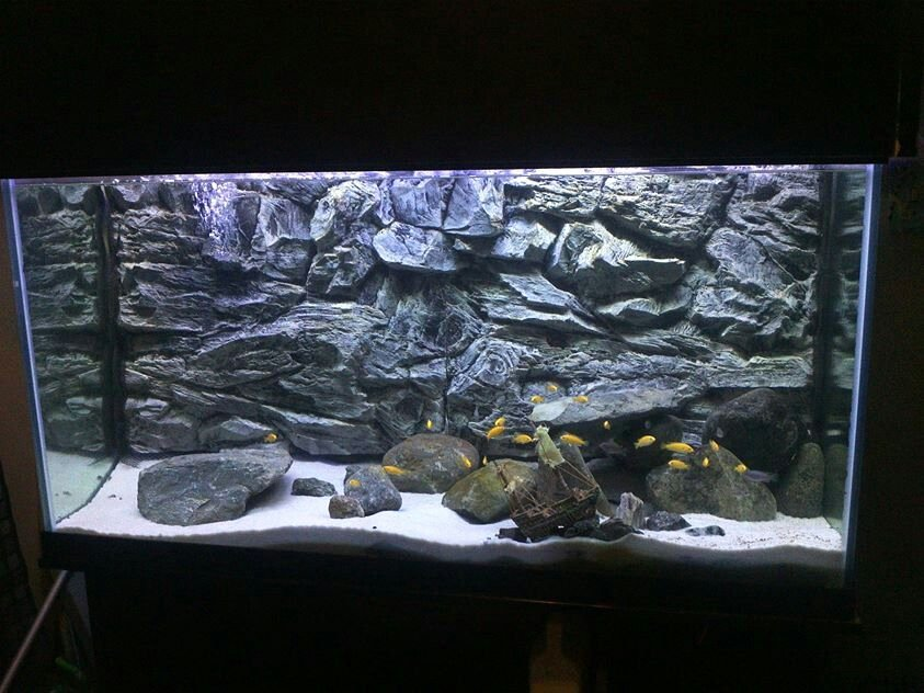 Fish Tank Background Ideas Best Of 3d Grey Rock Background In 75 Gallon Aquarium
