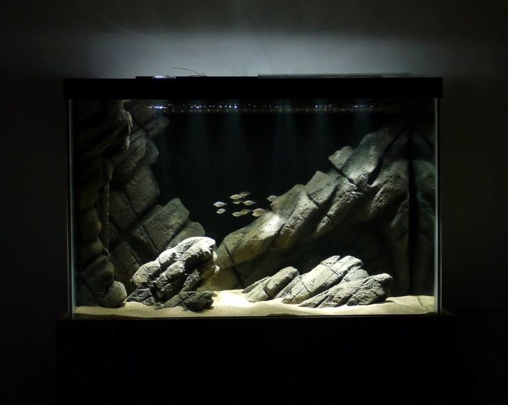 Fish Tank Background Ideas Best Of Best 10 Aquarium Backgrounds Ideas On Pinterest