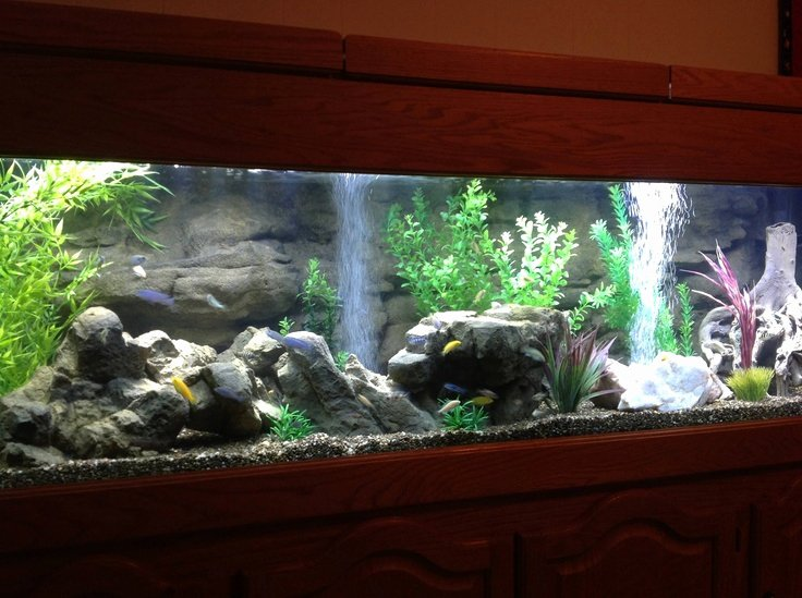 Fish Tank Background Ideas Fresh 29 Best Images About Aquarium Tank Set Ups On Pinterest