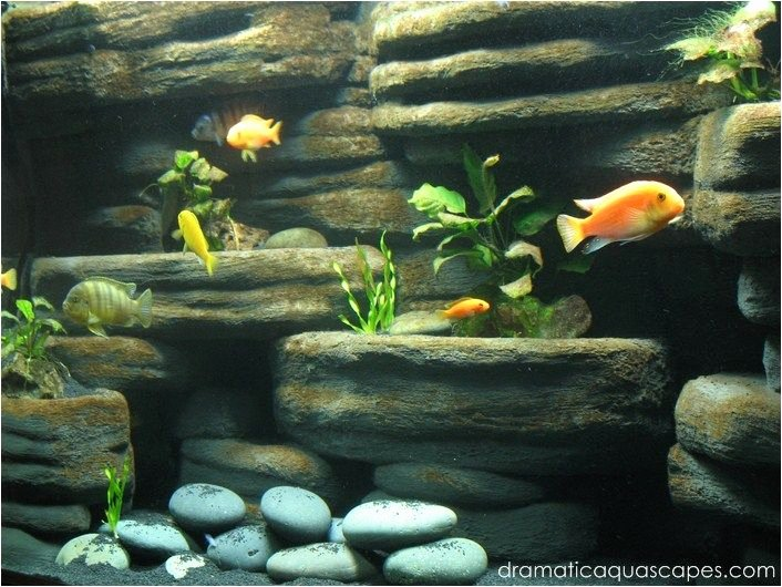 Fish Tank Background Ideas Inspirational Diy Aquarium Background Rock Ledges