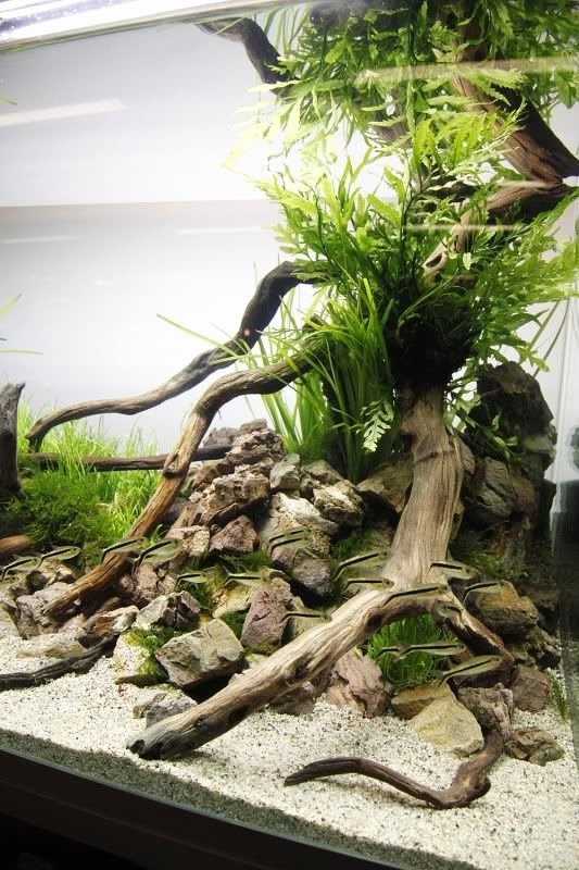 Fish Tank Background Ideas New 25 Best Ideas About Aquarium Backgrounds On Pinterest