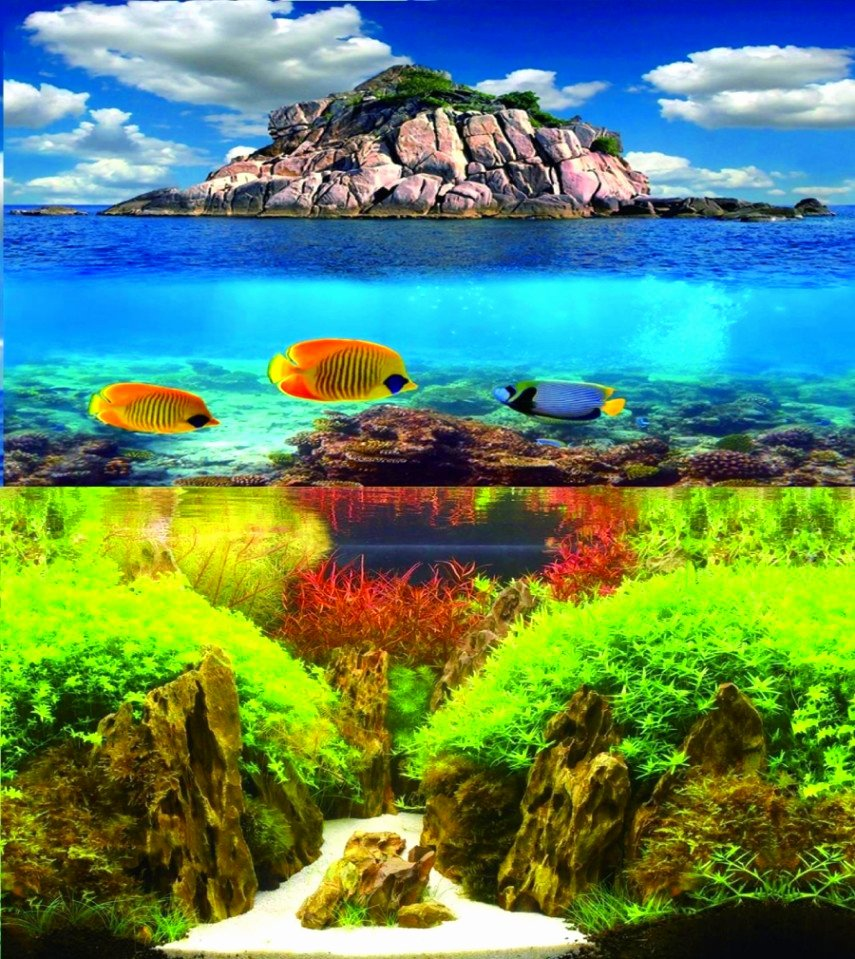 Fish Tank Background Paper Beautiful 60cm Double Sided Aquarium Background Fish Tank Backing