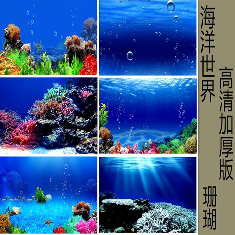 Fish Tank Background Paper Beautiful Background Stickers for Fish Tanks Impremedia