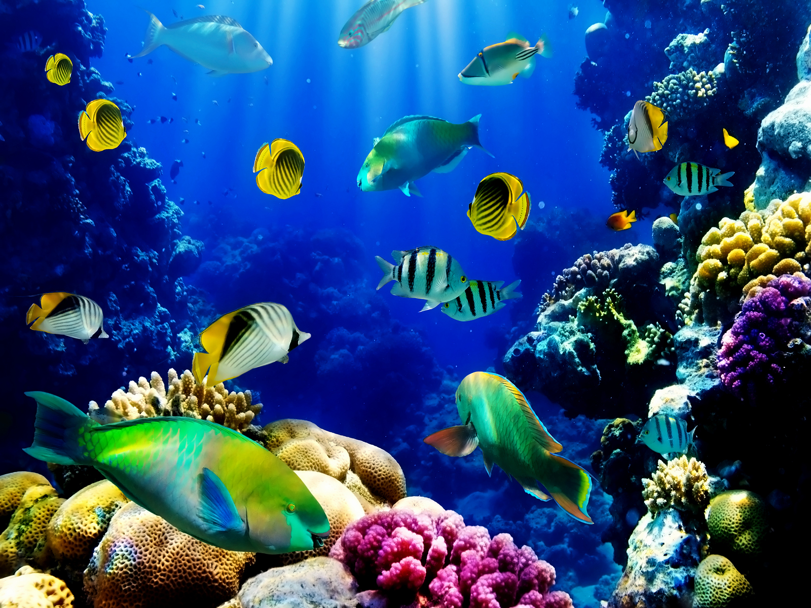 Fish Tank Background Paper Lovely [50 ] 3d Live Wallpapers for Pc On Wallpapersafari