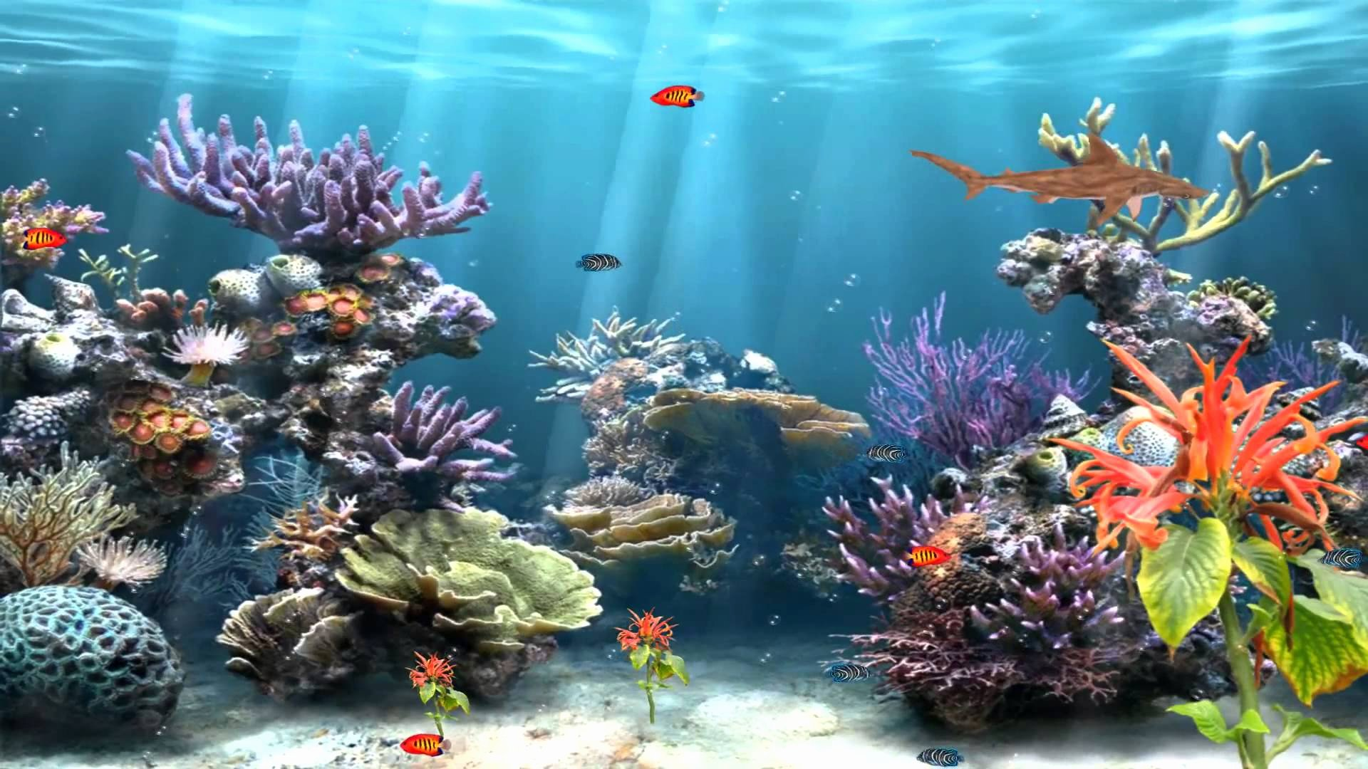 Fish Tank Background Paper Lovely Aquarium Backgrounds Download Free