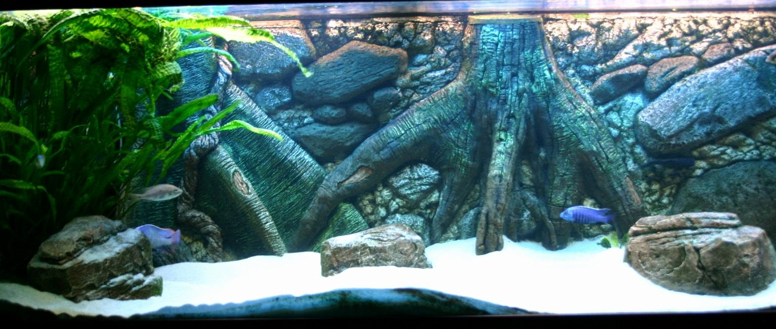 Fish Tank Background Pictures Awesome Aquarium Background 55 Gallon Aquarium Background
