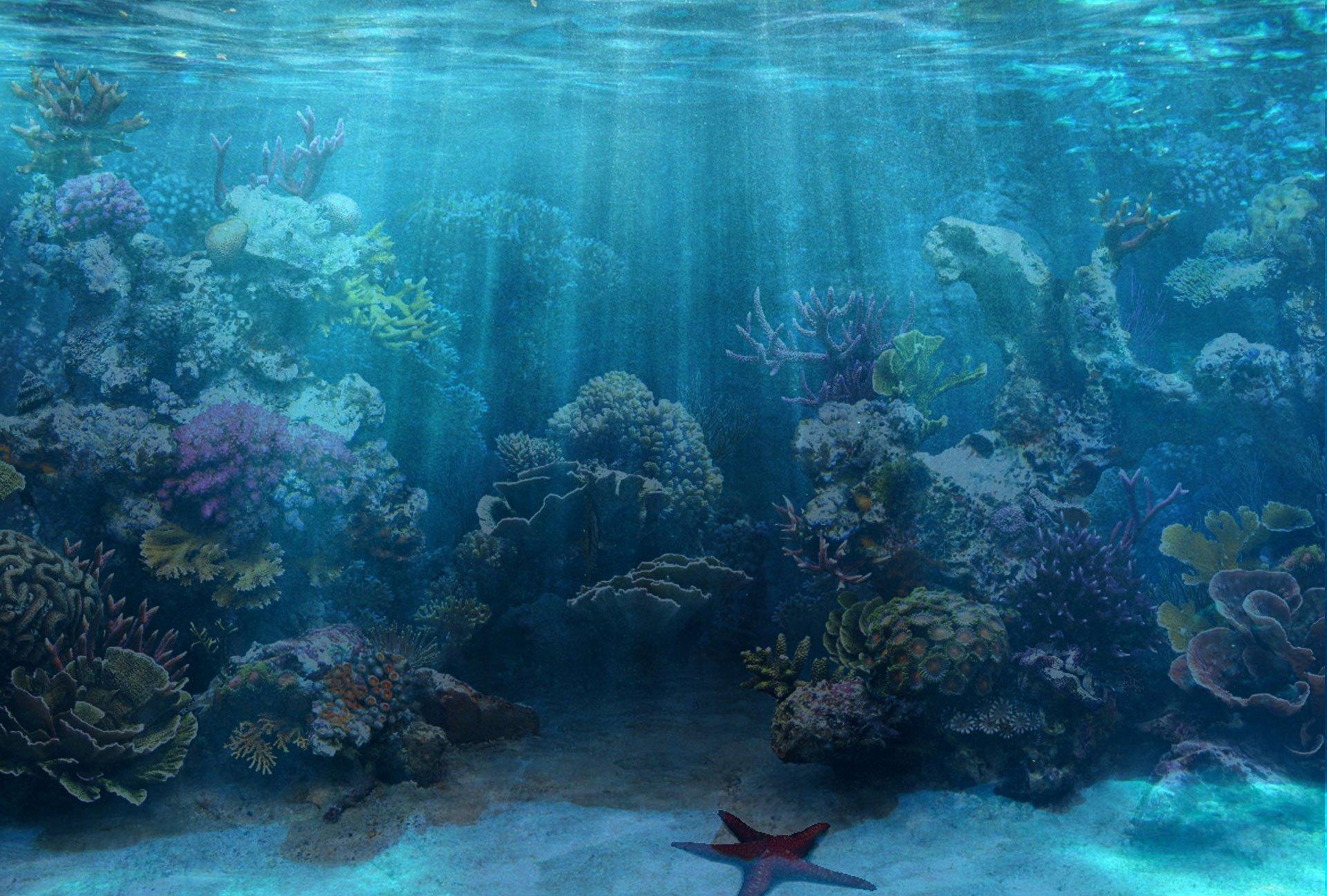 Fish Tank Background Pictures Awesome Aquarium Background Wallpapersafari