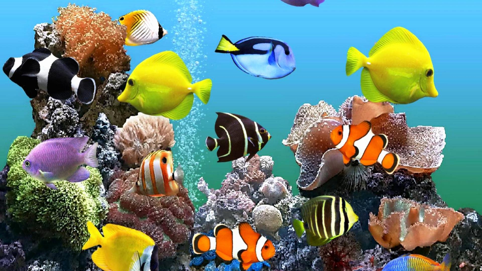 Fish Tank Background Pictures Awesome Fish Tank Wallpapers Hd