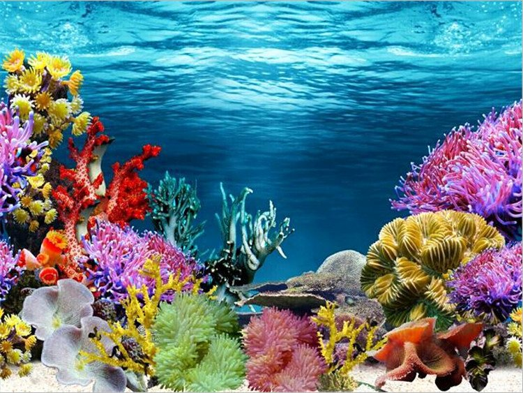 Fish Tank Background Pictures Best Of Aquarium Fish Tank Backdrop and Background Paper Reptile