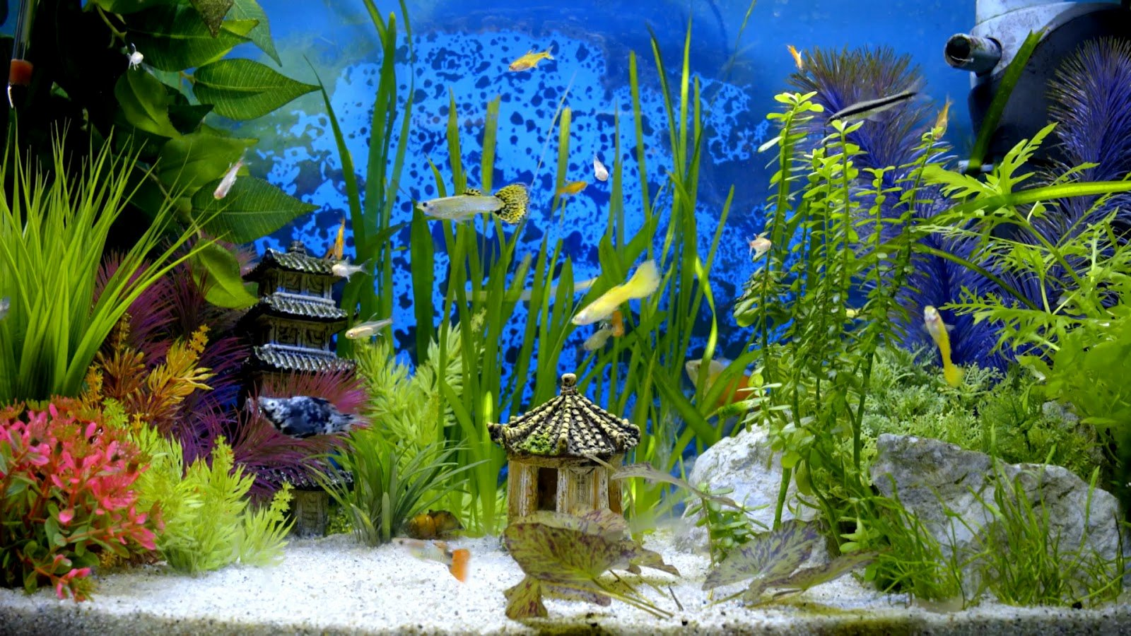 Fish Tank Background Pictures Lovely 4k Aquarium Video as Desktop Wallpaper