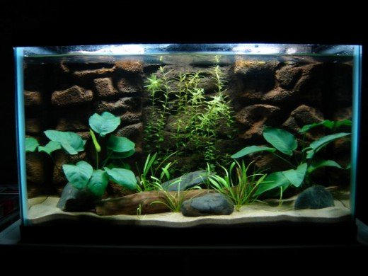 Fish Tank Background Pictures Lovely How to Make A 3d Fish Aquarium Background